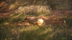 a deer eating grass in a field