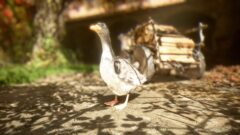 a close up of a bird