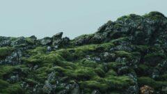 a tree on a rocky hill