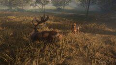 a deer lying down in a field