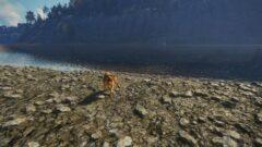 a dog standing on a rocky beach
