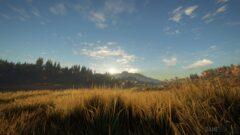 a field of tall grass