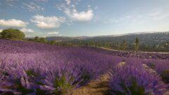 a group of purple flowers in a field