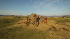 a herd of cows walking across a dry grass field
