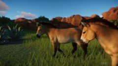 a couple of brown horses standing on top of a lush green field