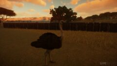 a bird standing in front of a sunset
