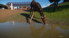 a giraffe standing next to a body of water