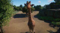 a giraffe standing in the dirt