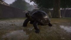 a turtle in the grass