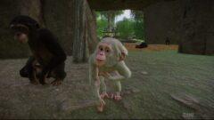 a monkey holding a dog