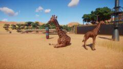 a giraffe is walking in the sand