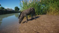 a zebra standing next to a body of water