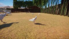 a flock of seagulls are standing in the grass