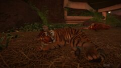 a tiger lying in the grass