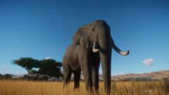 a large elephant standing on top of a dry grass field