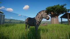 a couple of zebra standing on top of a grass covered field