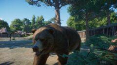a bear in a zoo exhibit