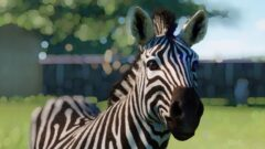 a close up of a zebra looking at the camera