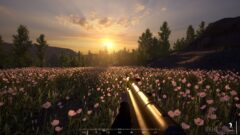 a close up of a flower garden in front of a sunset