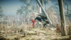 a bird standing on a dry grass field