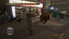 a bear that is walking in front of a store