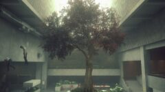 a tree in a room