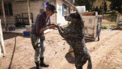 a man petting a dog