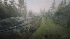 a train traveling down train tracks near a forest